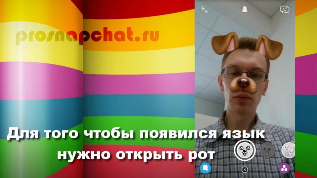 lico_sobachki